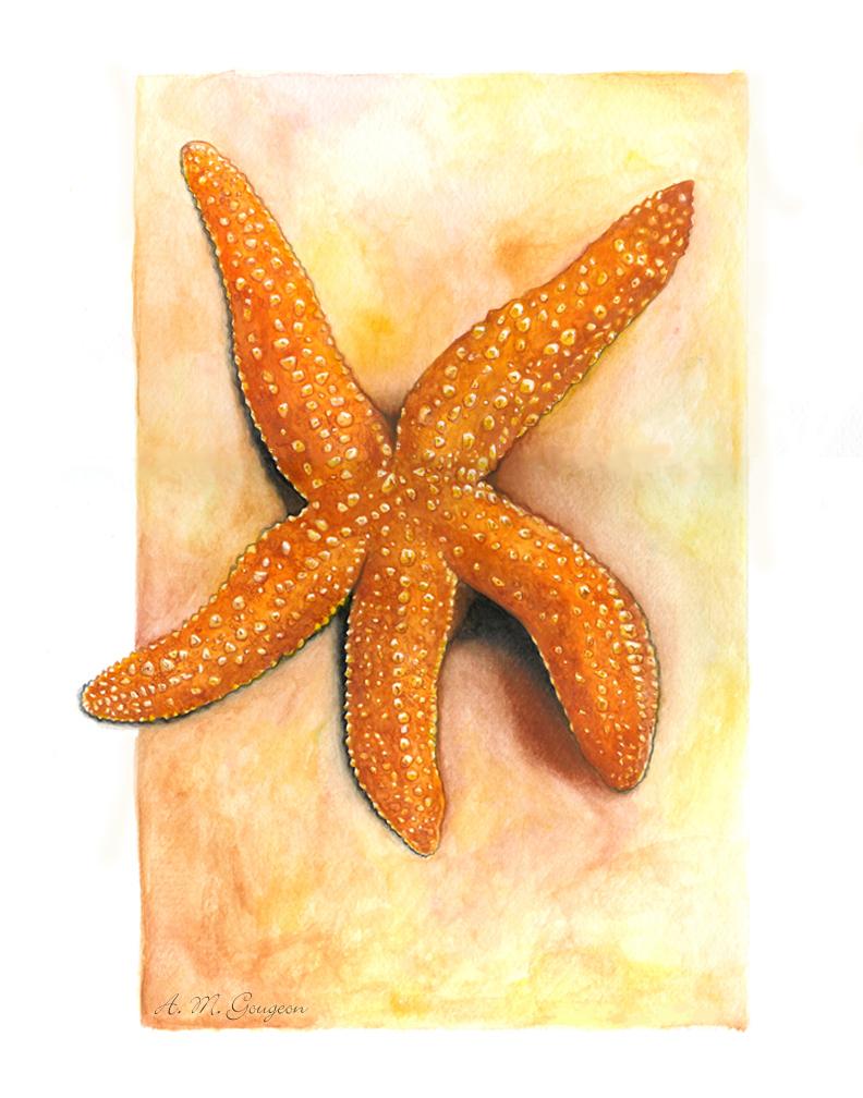 Sandy звезда