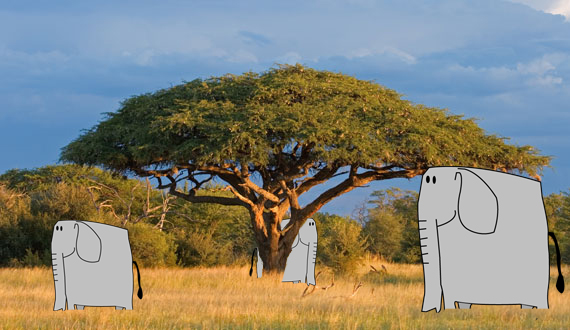 Elephants in Africa by Peshi