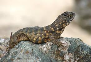 Lizard by MapleRose-stock