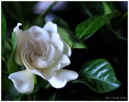 Pure by suzhou-taohuawu