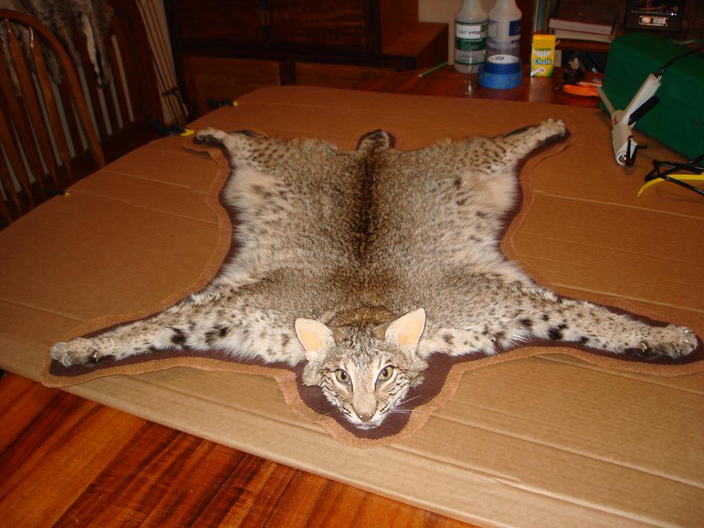 Bobcat Rug Home Decor