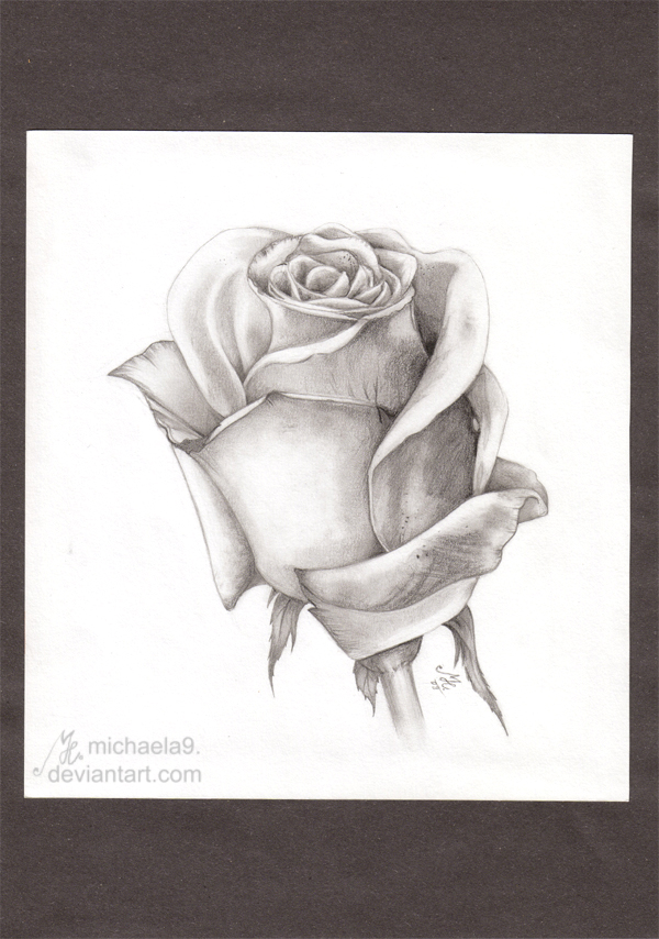 White Rose by Michaela9