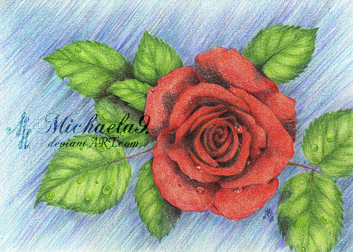 Beautiful Rose by Michaela9