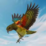 Kea Parrot of Newzealand