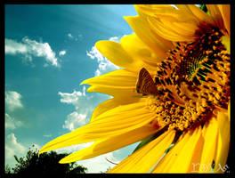 SunFlower by yaryooor