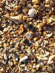 Shells2 by ddanette