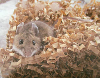Cat caught a Mouse by SailorUsagiChan