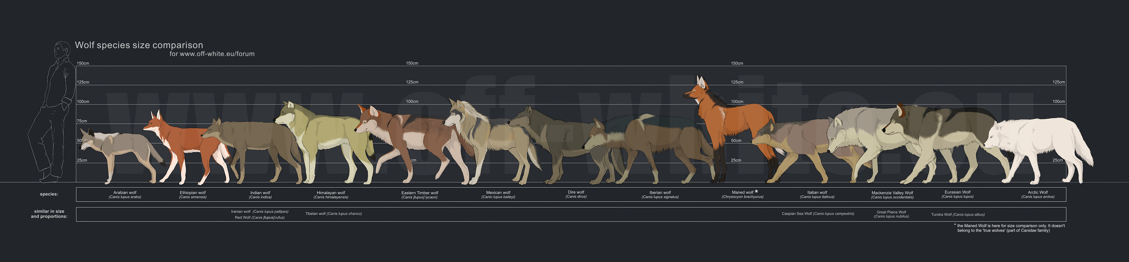 http://orig06.deviantart.net/20af/f/2009/151/4/7/wolf_species_size_comparison_by_tanathe.jpg