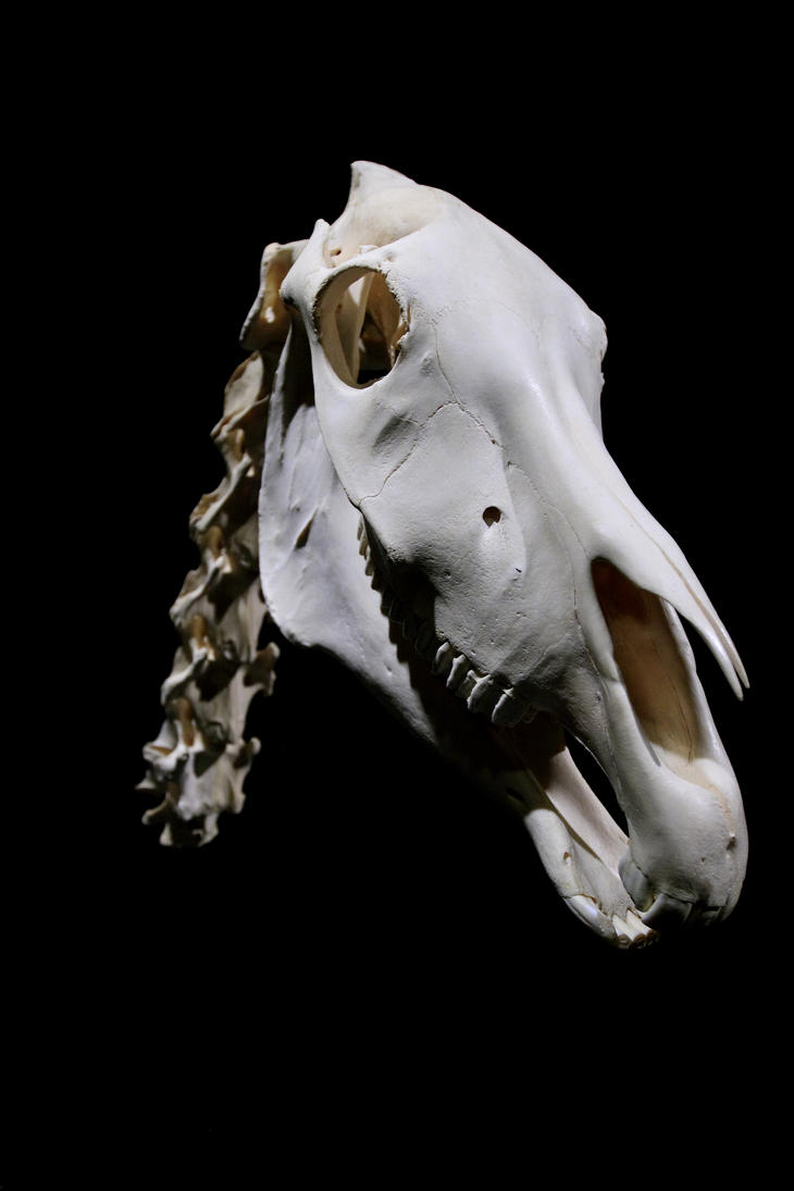 Horses' Neck by raistlin306