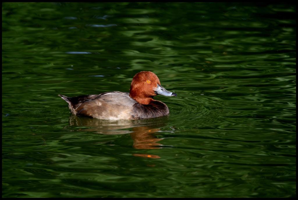 Redhead by raistlin306