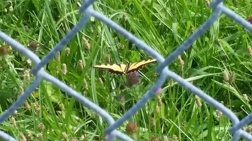 Butterfly by FlyingPastaKitty