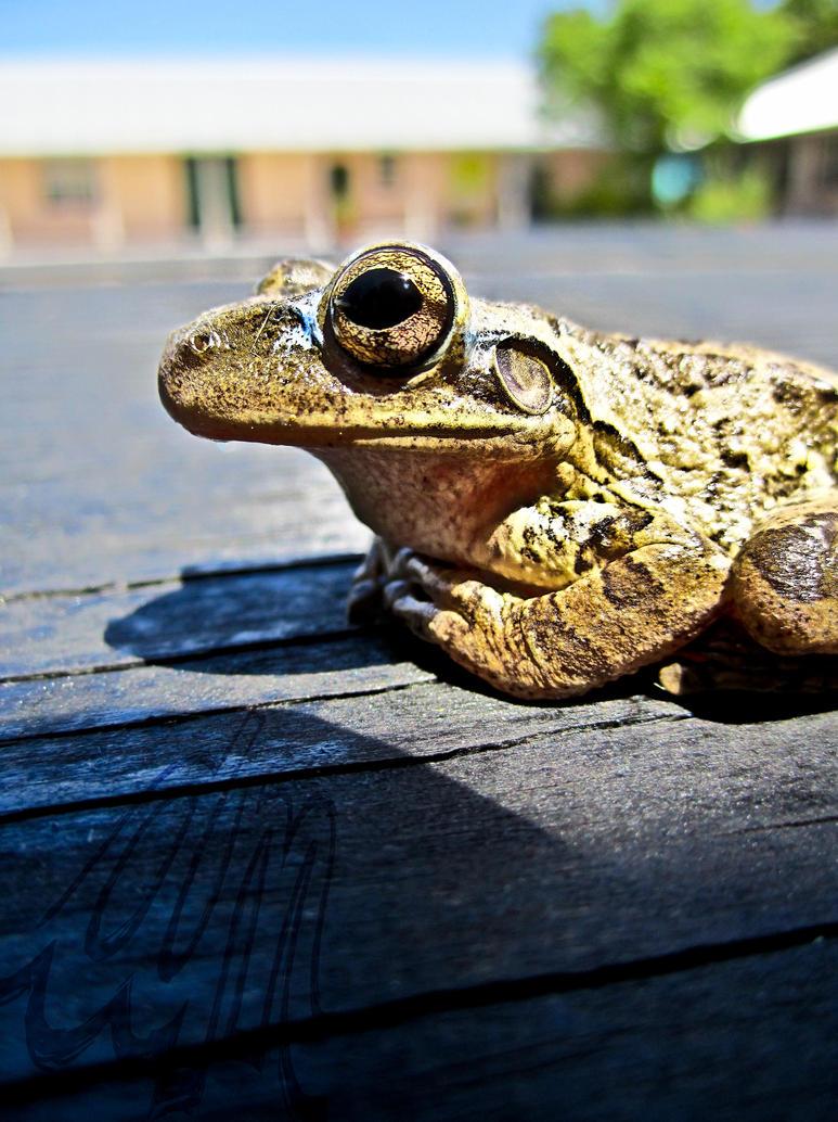 Froggie III by mangodanii