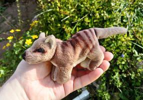 Pocket Thylacine