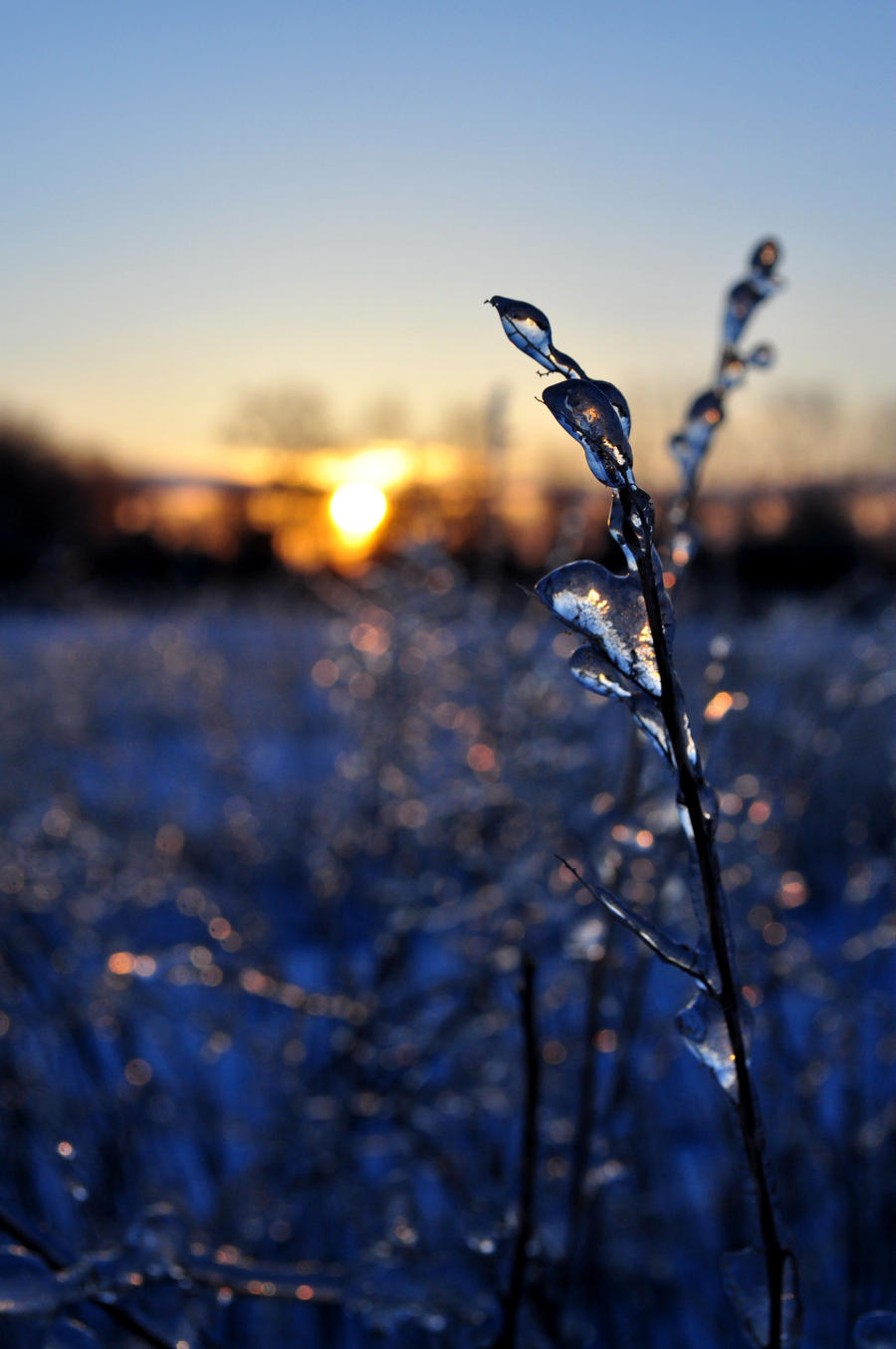 Plavo kao ... - Page 6 Icy_bokeh_by_dragon_fly_to_me-d3dbrnm