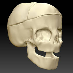 Skull with Rickets in Zbrush