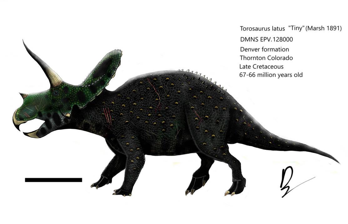 Torosaurus latus reconstruction dmns