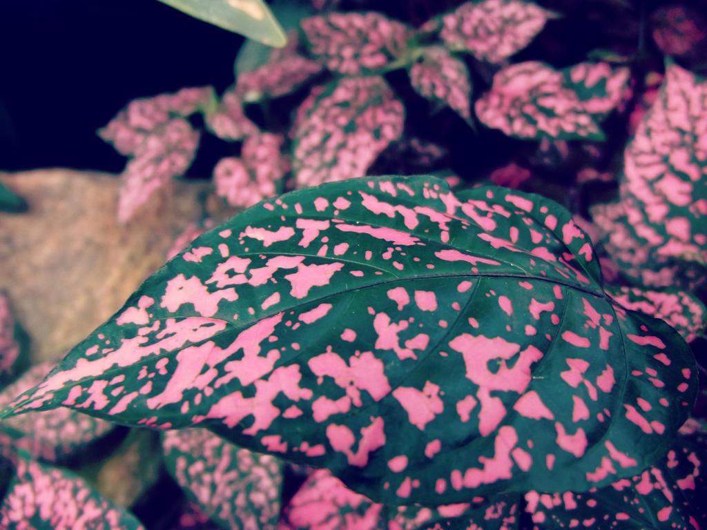 Pink speckles by Transkitten