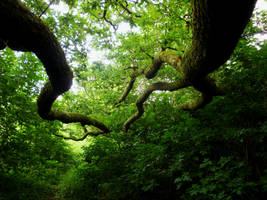 Limbs Of Oak by Estruda