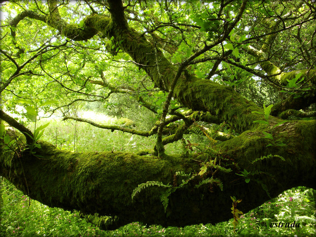 Natures Velvet by Estruda