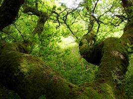 velvet branches of the oak by Estruda