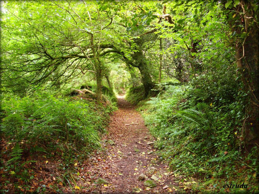 A Walk Into Nature by Estruda