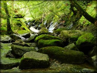 the velvet in the woods by Estruda