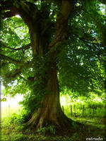 magical tree by Estruda