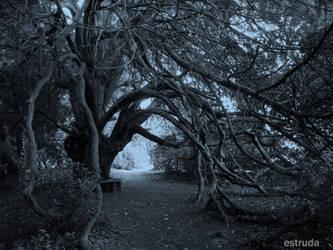 Moonlit Tree by Estruda