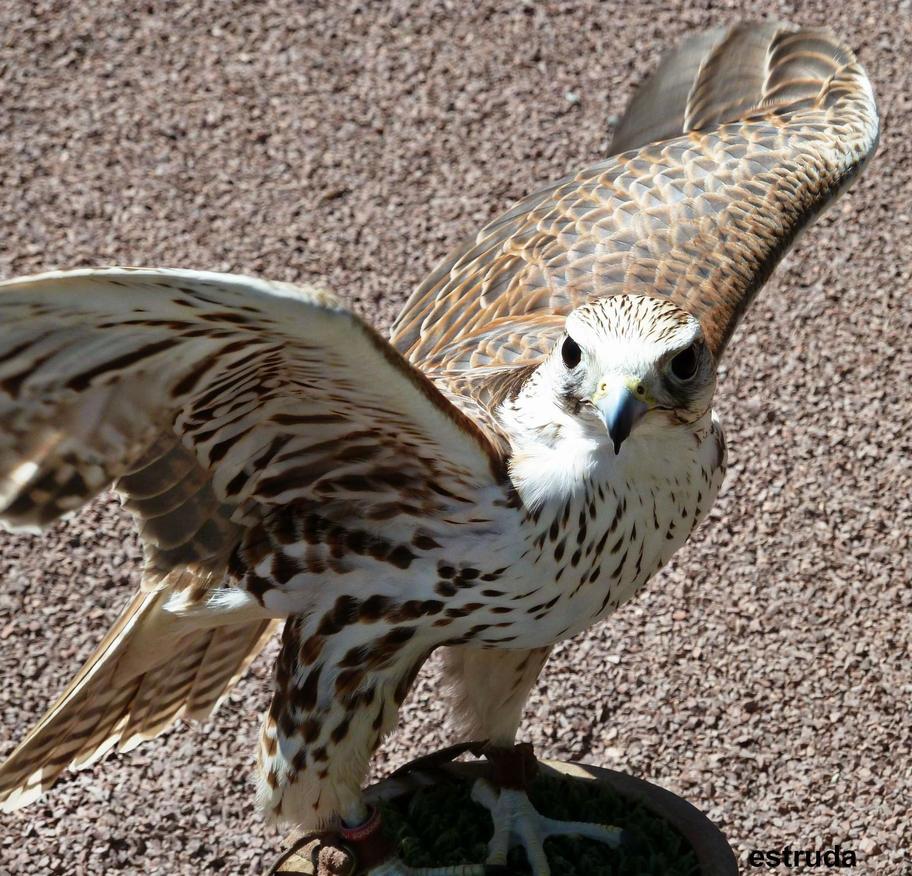 Hunting Bird 2 by Estruda