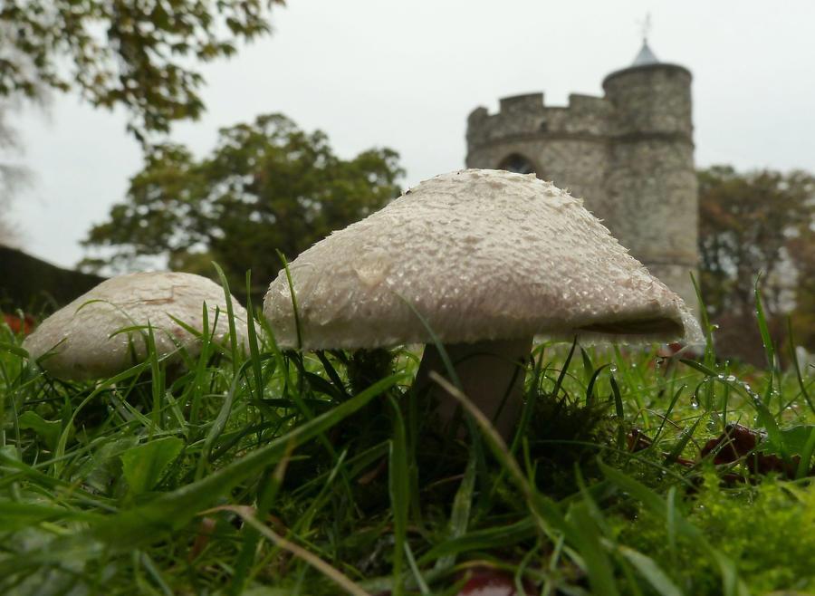 Fairyland Mushrooms by Estruda