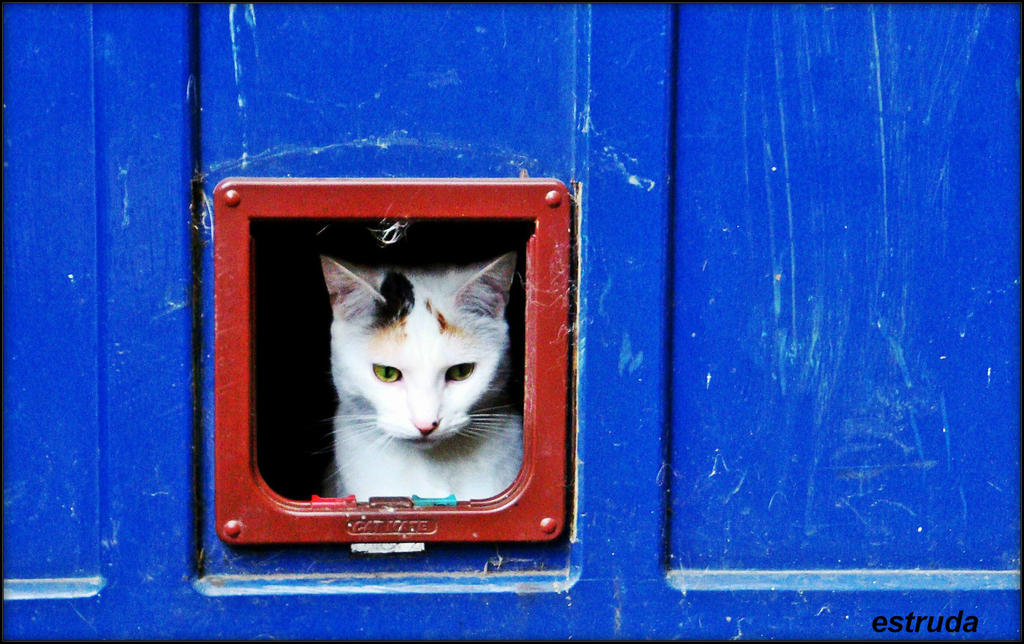 Cat Flap by Estruda