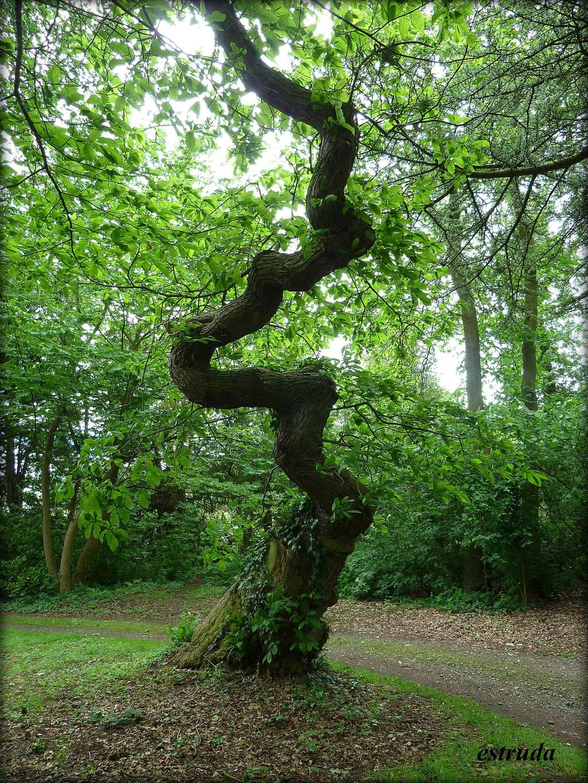 The Serpent Tree by Estruda