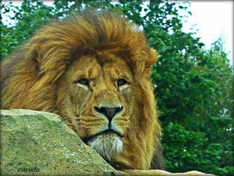 The Lion by Estruda