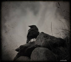 The Raven Looks Out