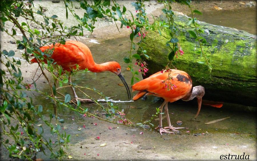 Birds by Estruda