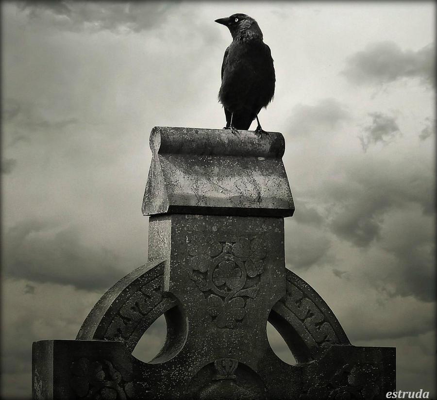 The Seeker by Estruda