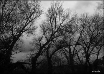 Trees by Estruda