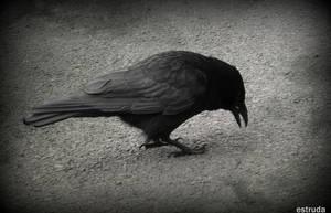 The Crow by Estruda