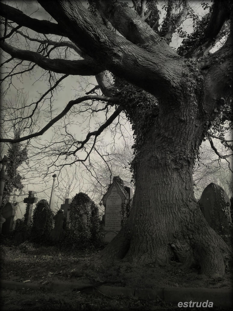 The Old Cemetery Tree by Estruda