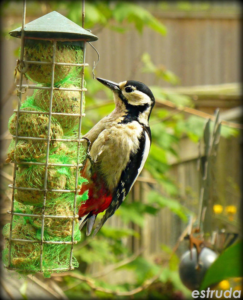 The woodpecker by Estruda