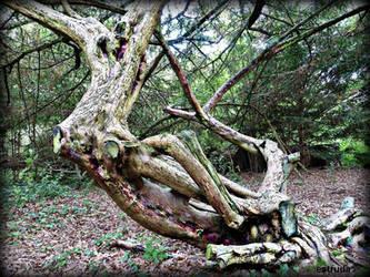 Twisted Tree by Estruda