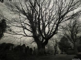 The Stones Beneath The Tree