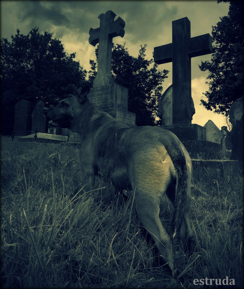 Guardian Of The Dead by Estruda