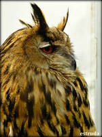 The Owl by Estruda