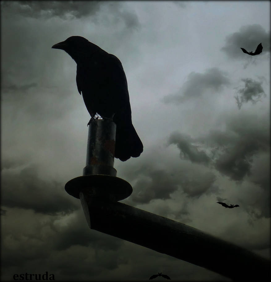 The Raven And The Bats