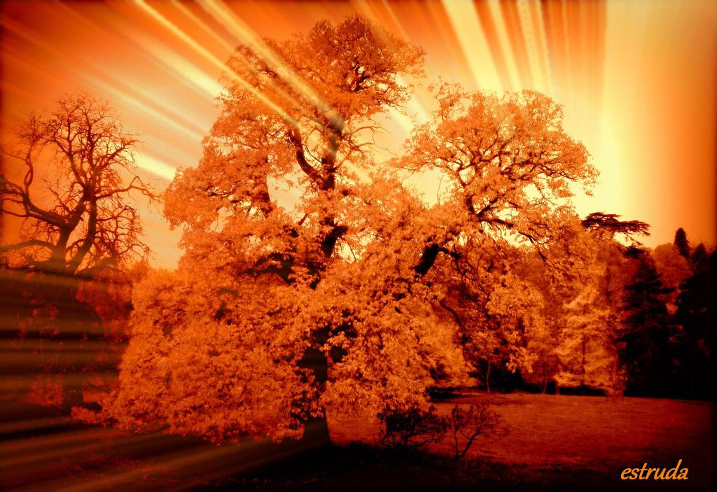 Autumns Fire by Estruda