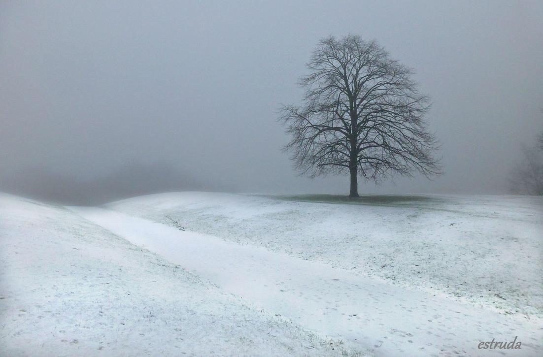 Winters Fog by Estruda