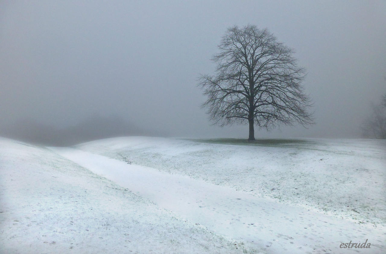 Winters Fog by Estruda
