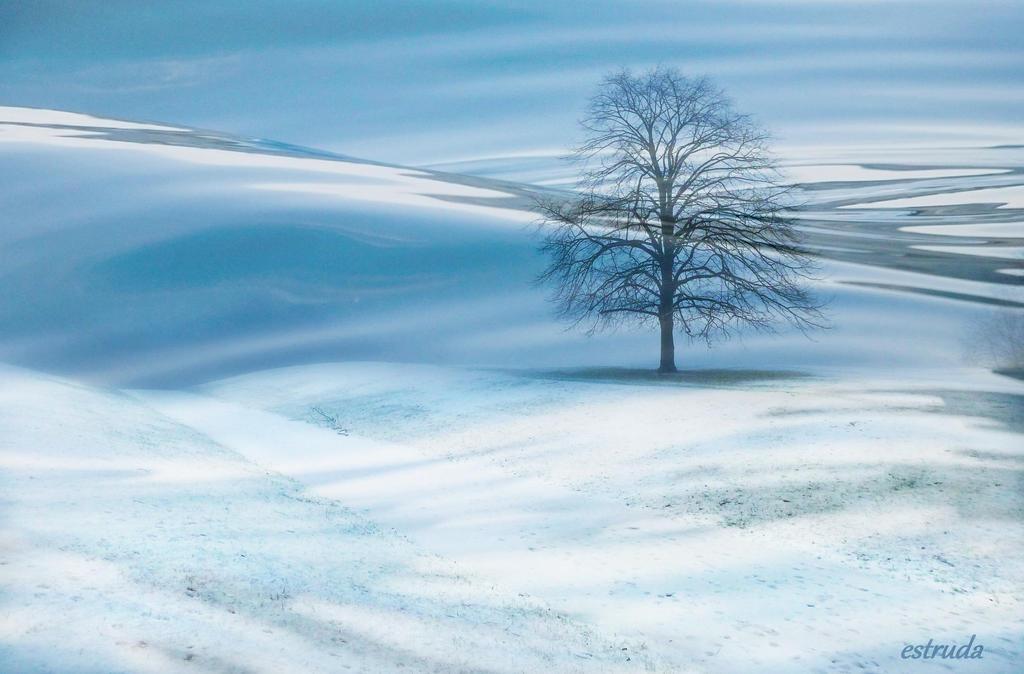 Winters Tree by Estruda