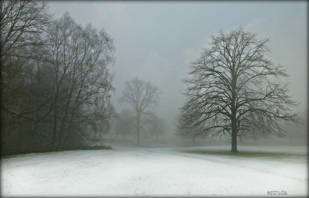 Snowy Landscape by Estruda